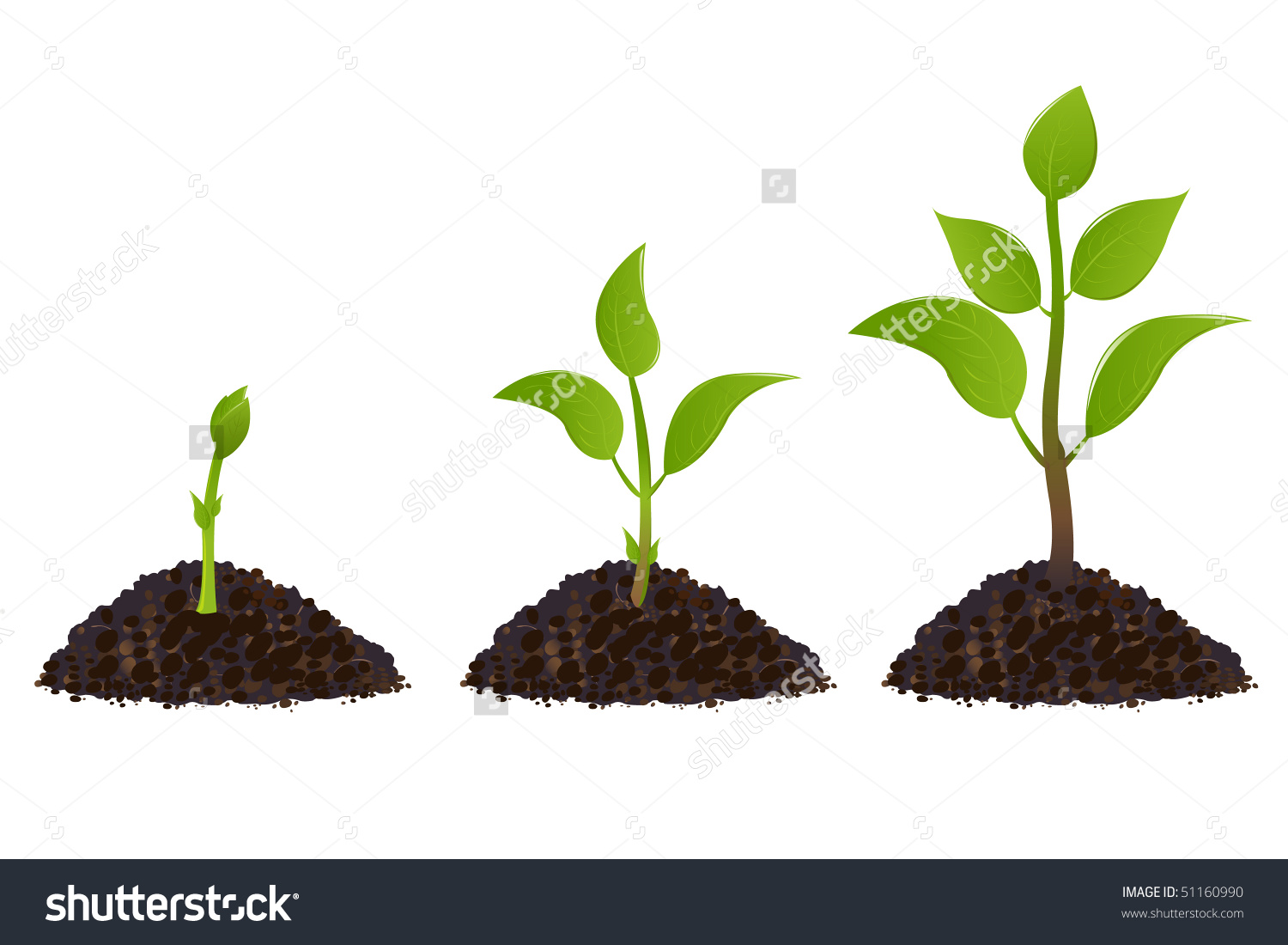 Green Young Plant Life Process, Isolated On White Stock Vector.
