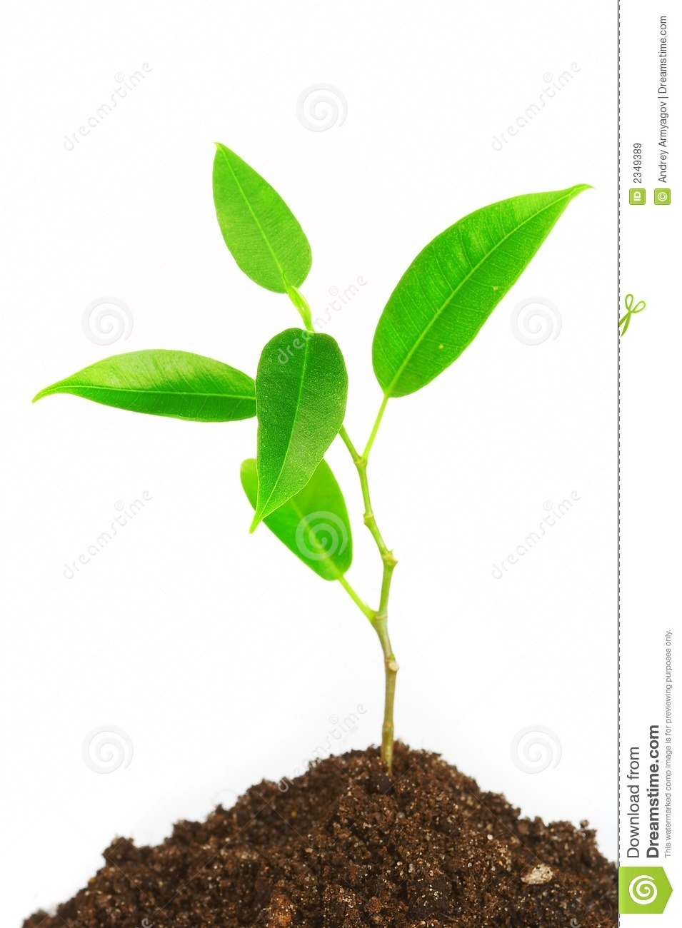 Young Plant Royalty Free Stock Images.
