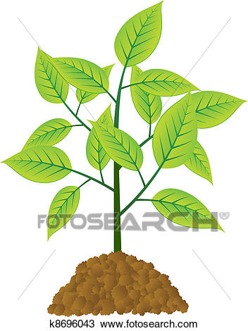 Vector young tree Clipart.