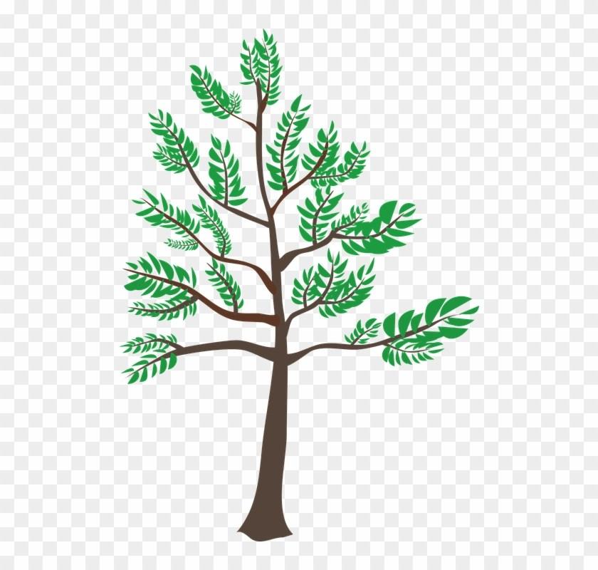 Young tree clipart » Clipart Portal.