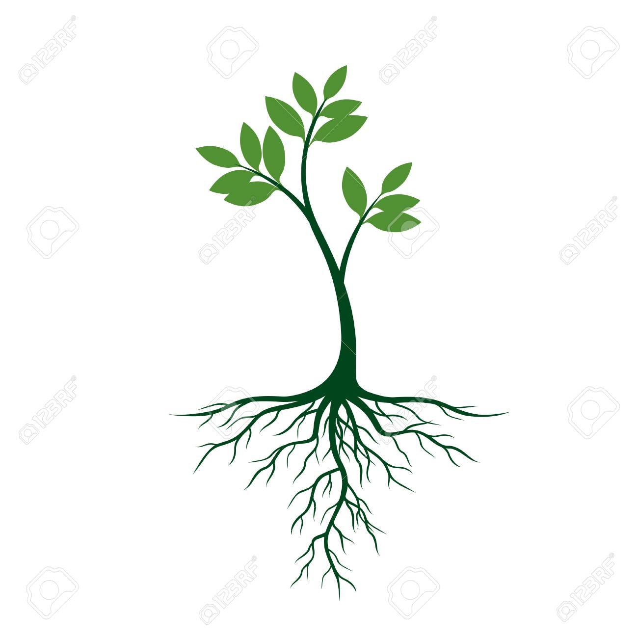 Young Tree with Roots and Leafs. Vector Illustration..