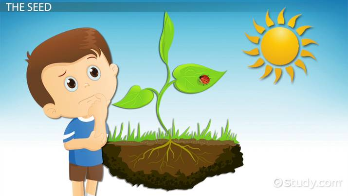 How Plants Grow: Lesson for Kids.