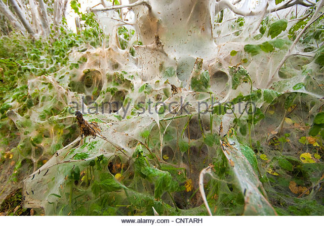 Butterfly Net Plants Insects Stock Photos & Butterfly Net Plants.