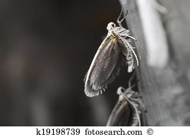 Yponomeutidae Stock Photo Images. 23 yponomeutidae royalty free.