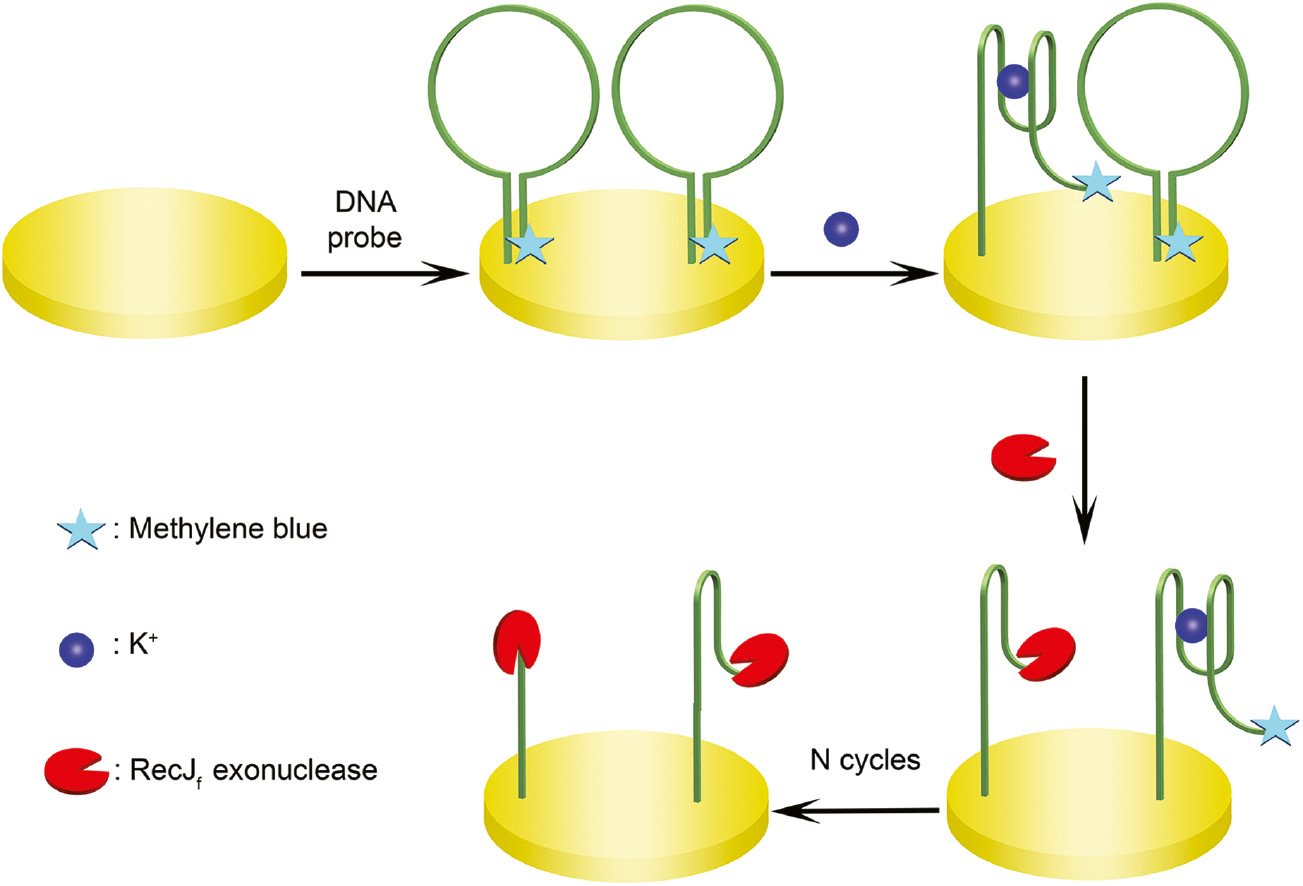 Electrochemical aptasensors for detection of small molecules.