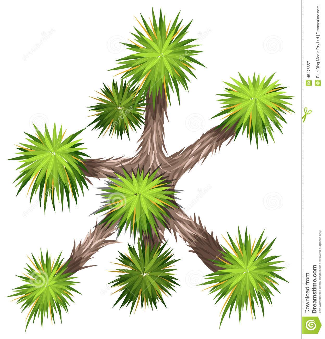 Yucca Brevifolia Stock Vector.