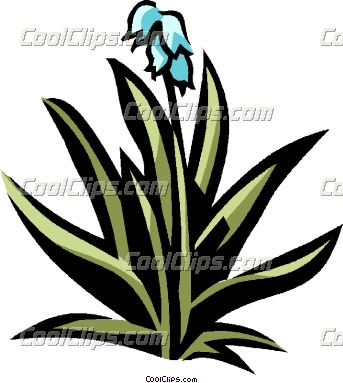 Yucca 20clipart.