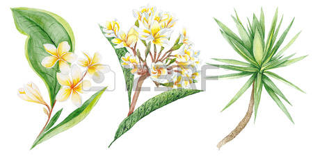 72 Yucca Palm Cliparts, Stock Vector And Royalty Free Yucca Palm.
