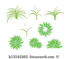 Yucca Clip Art EPS Images. 80 yucca clipart vector illustrations.