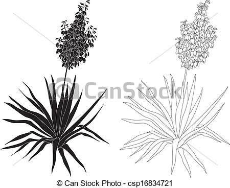 yucca-clipart-7 Giant Palm House Plant on wedding plants, indoor plants, pagoda plants, palm drawing, church plants, palm sunset, palm looking plants, potted palm plants, palm buds, palm like plants, tree plants, biosphere 2 plants, outdoor palm plants, palm leaf plants, kinds of palm plants, palm silhouette, palm bamboo, palm christmas, palm identification guide, care of palm plants,