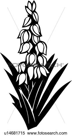 yucca clipart 20 free cliparts download images on