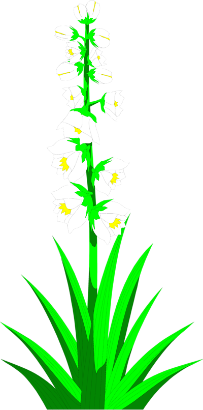 Clip art of yucca plant.