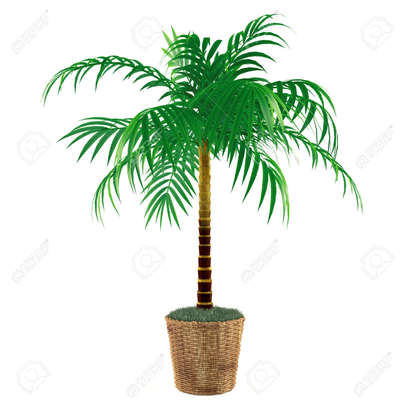 67 Palm Tree Yucca Stock Vector Illustration And Royalty Free Palm.