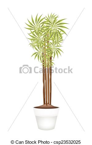 Vector Illustration of Yucca Tree and Dracaena Plant in Ceramic.