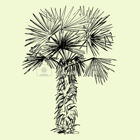 190 Yucca Stock Vector Illustration And Royalty Free Yucca Clipart.