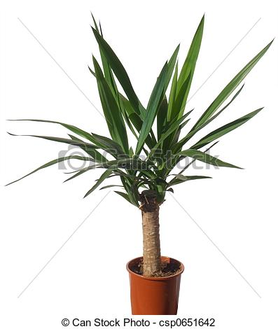 Yucca Images and Stock Photos. 2,663 Yucca photography and royalty.