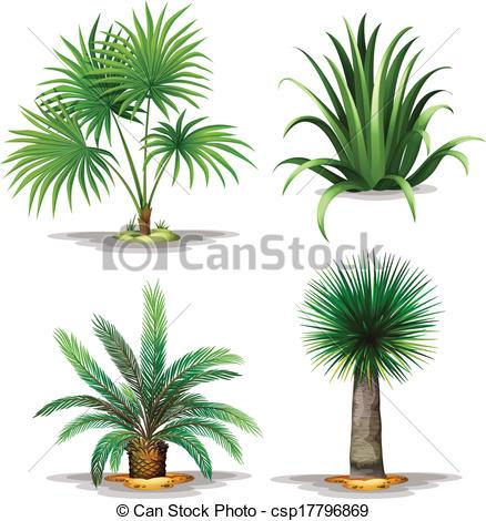 Clip Art Vector of Palm plants.
