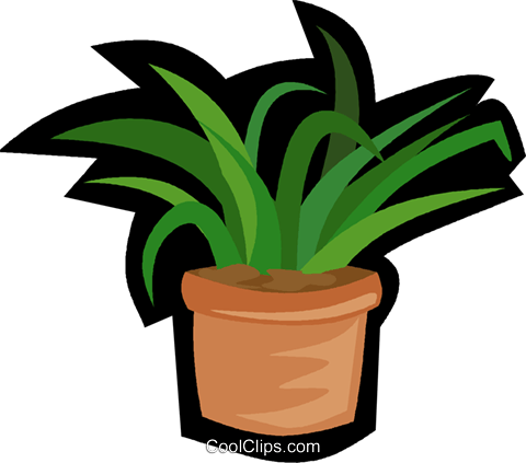 house plant, yucca plant Royalty Free Vector Clip Art illustration.