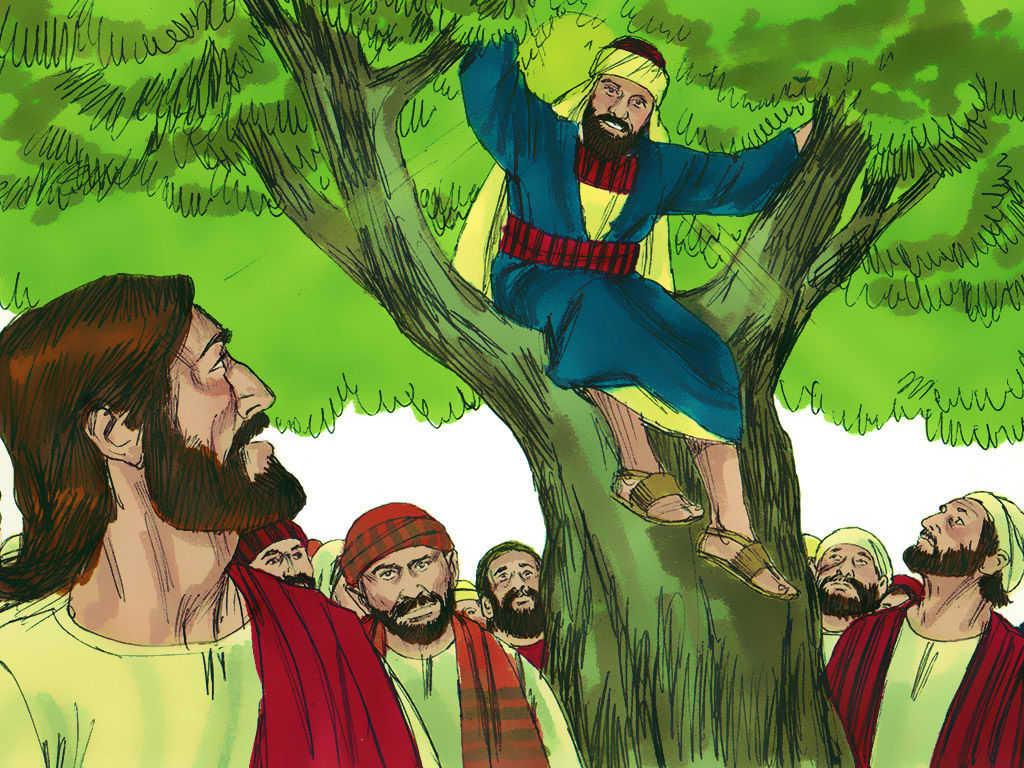 FreeBibleimages :: Zacchaeus the Tax Collector :: Zacchaeus.
