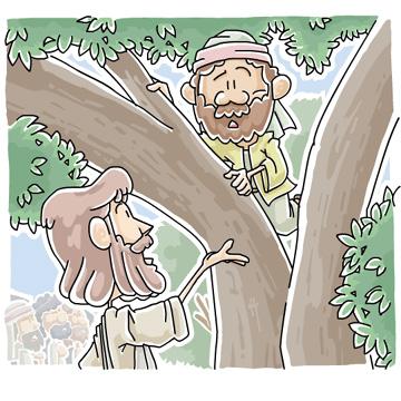 Tree Zacchaeus Clipart.