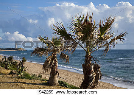 Stock Photograph of Palm Trees And Lighthouse At Cape Trafalgar.