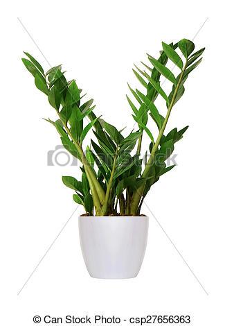 Stock Image of Houseplant.