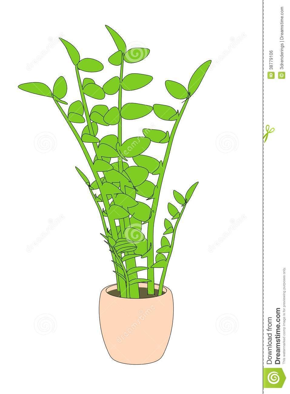 Zamioculcas Plant Stock Illustration.