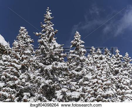 Stock Photo of Winter forest, Venet, Zams, Tyrol, Austria, Europe.