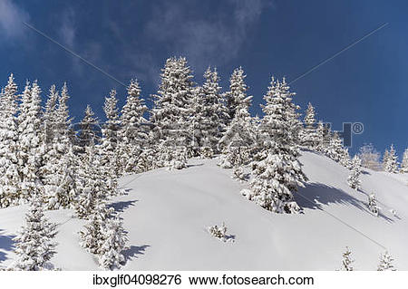 Stock Images of Winter forest, Venet, Zams, Tyrol, Austria, Europe.