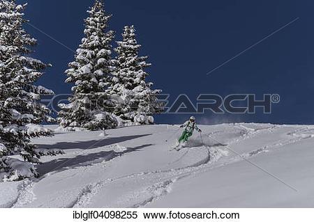 Stock Image of Skier in powder snow, freerider, Venet, Zams, Tyrol.