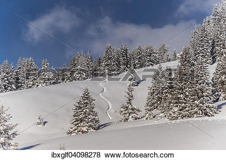 Pictures of Winter forest, Venet, Zams, Tyrol, Austria, Europe.