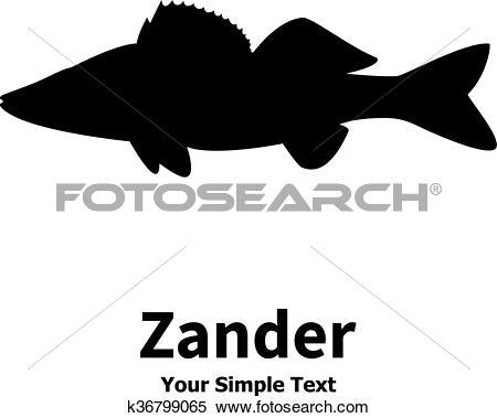 Clipart of Vector illustration silhouette of zander k36799065.