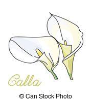 Zantedeschia aethiopica Vector Clip Art Royalty Free. 7.