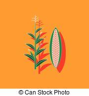 Zea mays Vector Clipart EPS Images. 10 Zea mays clip art vector.