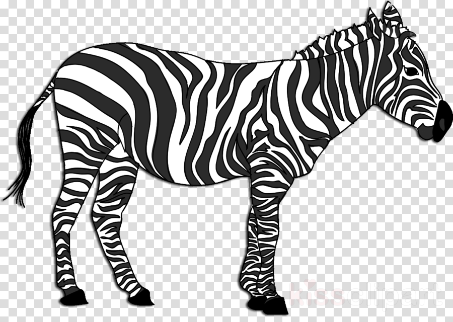Zebra Cartoon clipart.