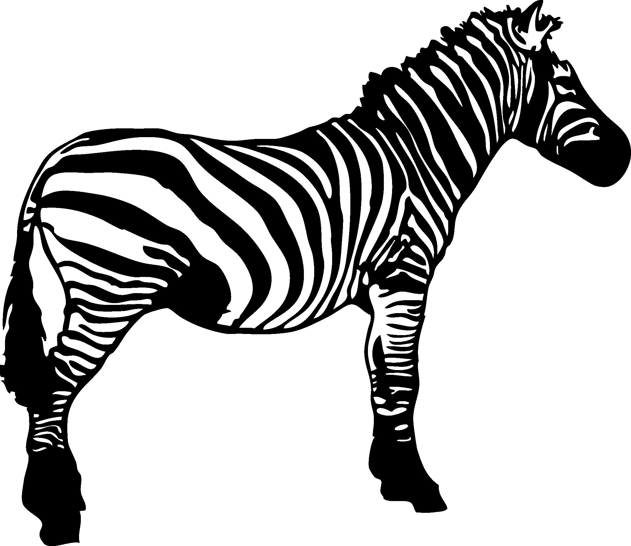 Zebra black and white clipart 1 » Clipart Station.