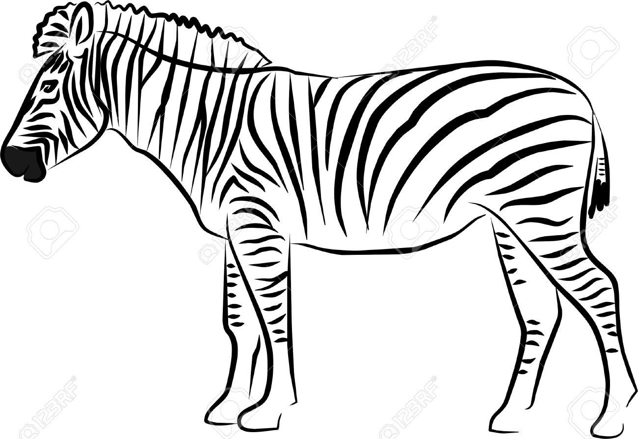 Zebra black and white clipart 2 » Clipart Station.