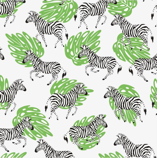 Zebra PNG clipart.