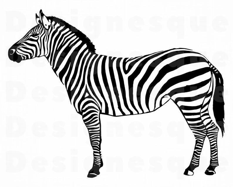 Zebra #2 SVG, Zebra SVG, Zebra Clipart, Zebra Files for Cricut, Zebra Cut  Files For Silhouette, Zebra Dxf, Zebra Png, Zebra Eps Zebra Vector.