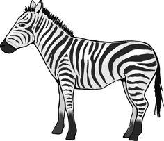 ➡ Zebra Clip Art Image Black And White 2019.
