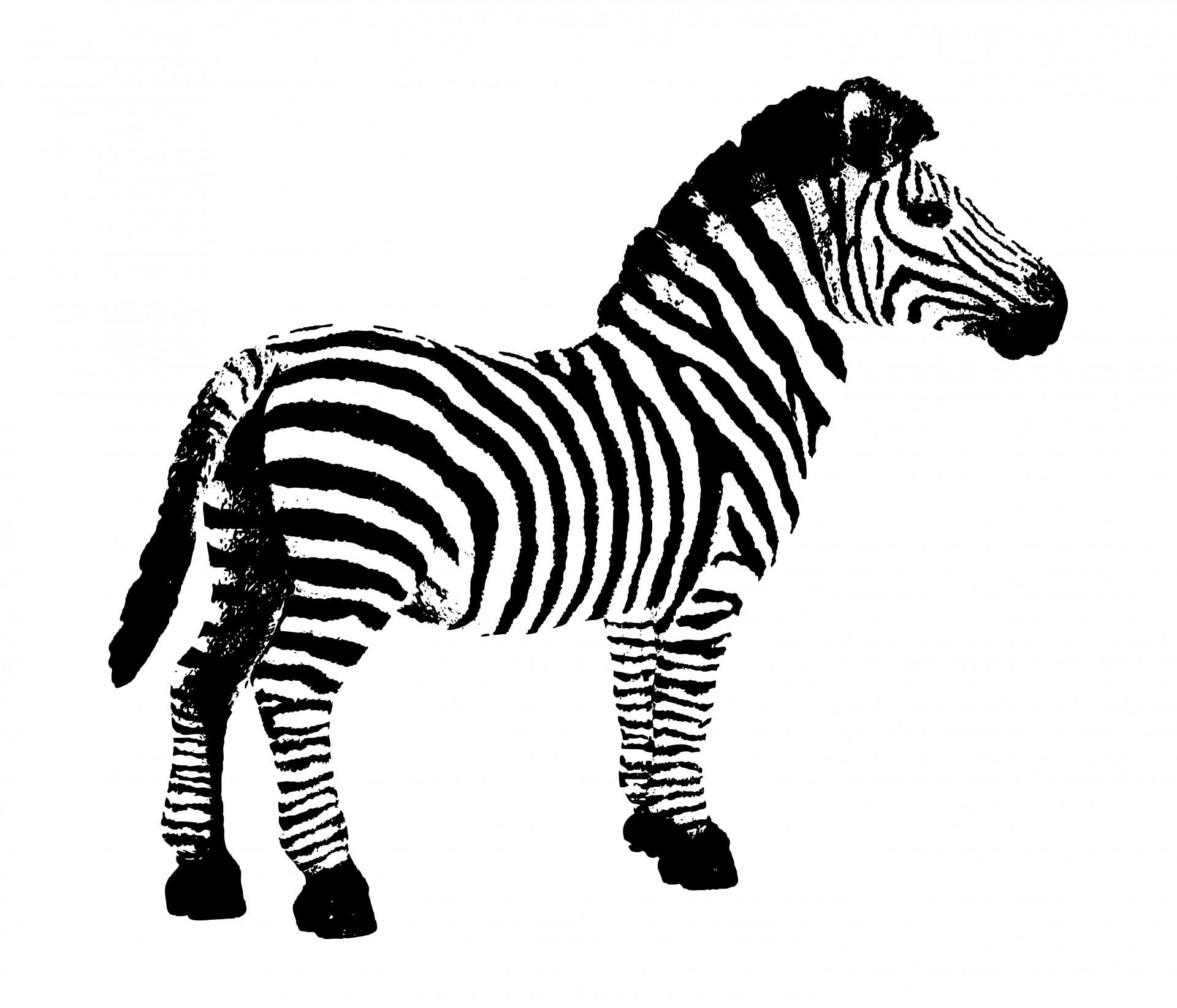 3654 Zebra free clipart.
