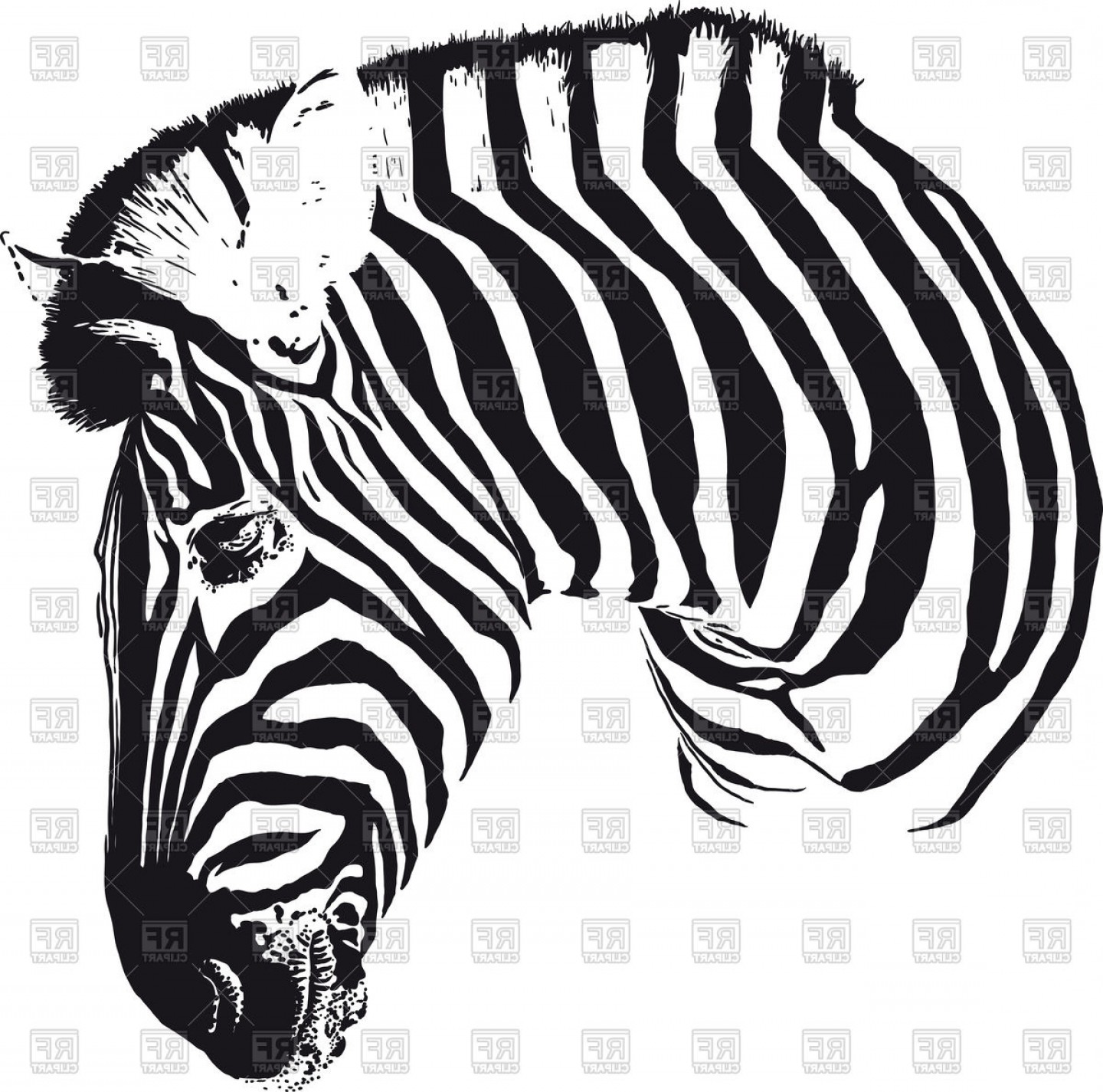 Painted Black Stripes Zebra Head Turned In Profile Vector.