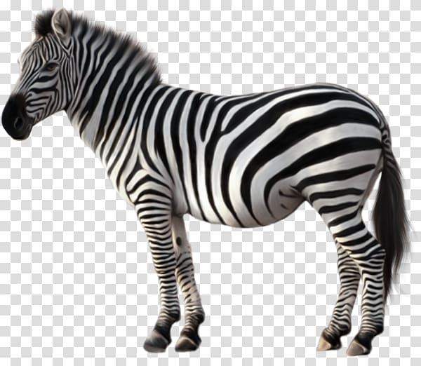 Zeba illustration, Quagga Zebra , Animal zebra transparent.