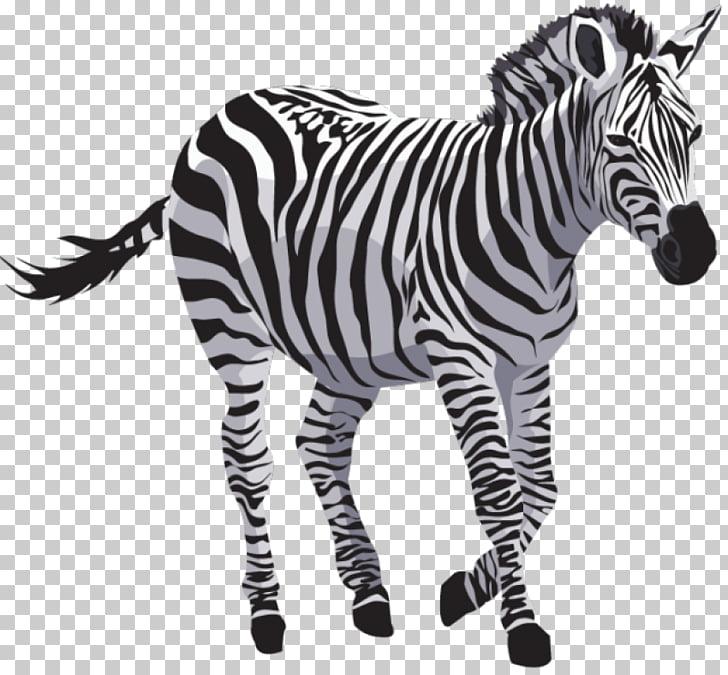 Zebra Quagga , zebra PNG clipart.