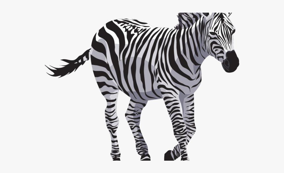 Zebra Clipart Transparent Background.