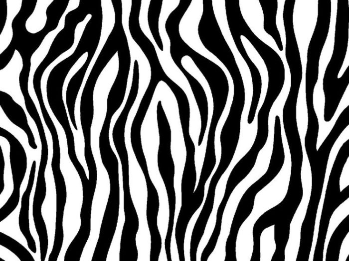 Zebra Color Clipart