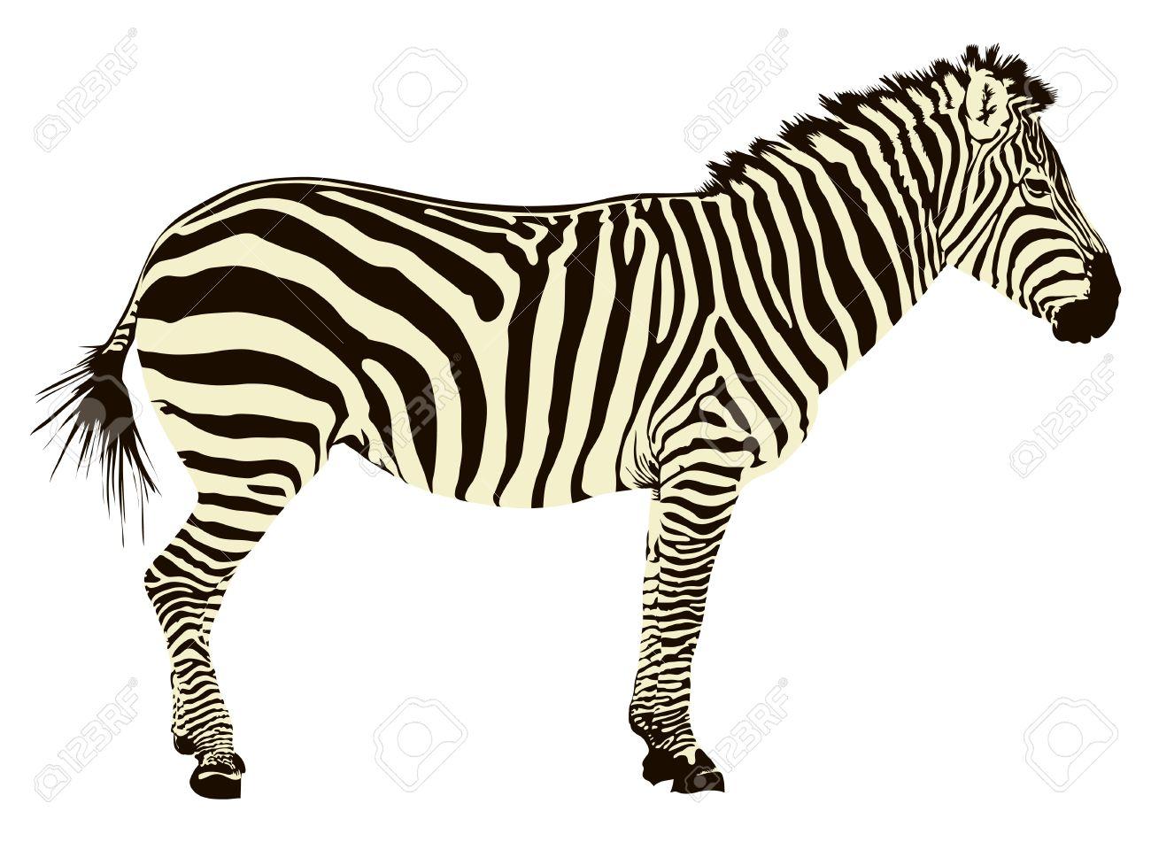 16,773 Zebra Cliparts, Stock Vector And Royalty Free Zebra.