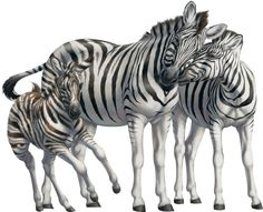 Baby zebra cartoon.