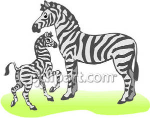 Baby Zebra and Mother Royalty Free Clipart Picture.