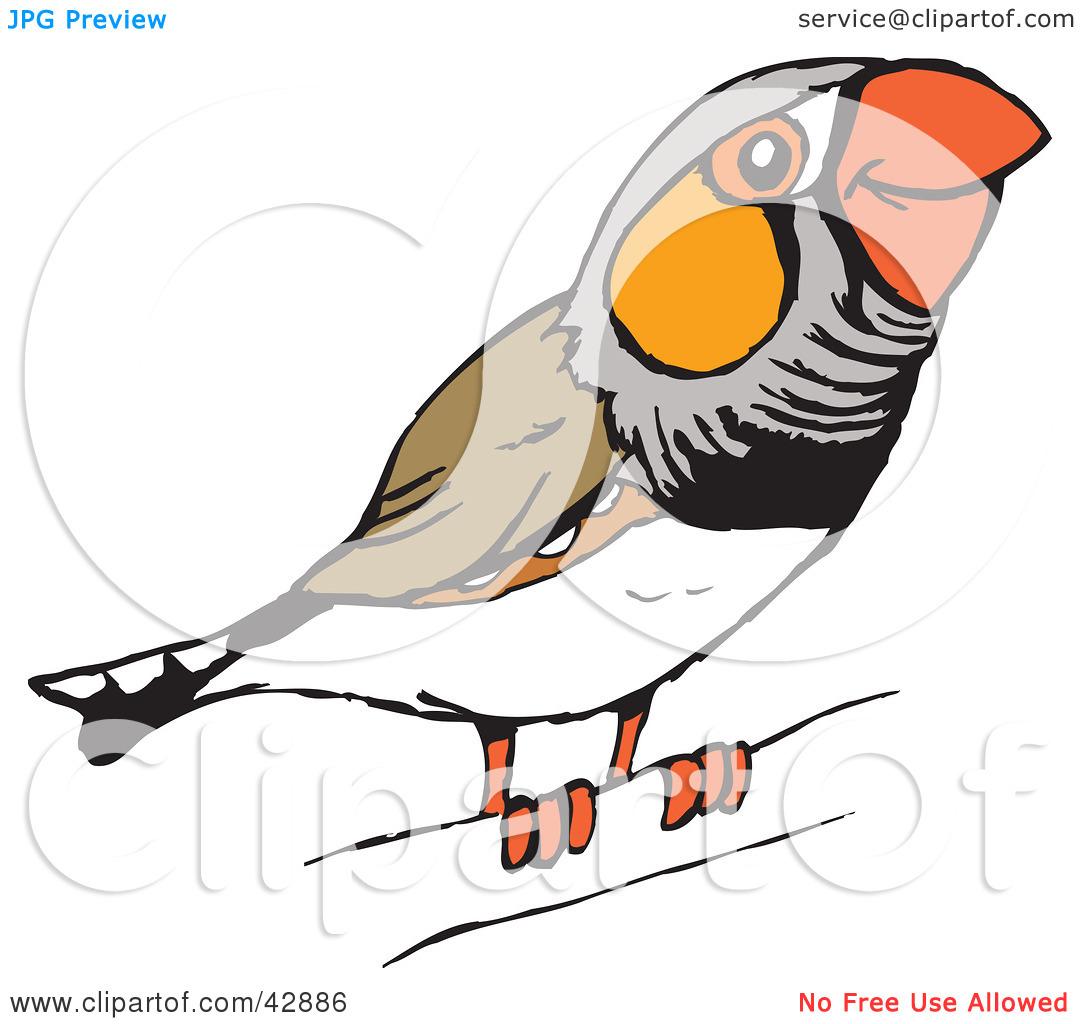 Clipart Illustration of a Happy Perched Zebra Finch (Taeniopygia.